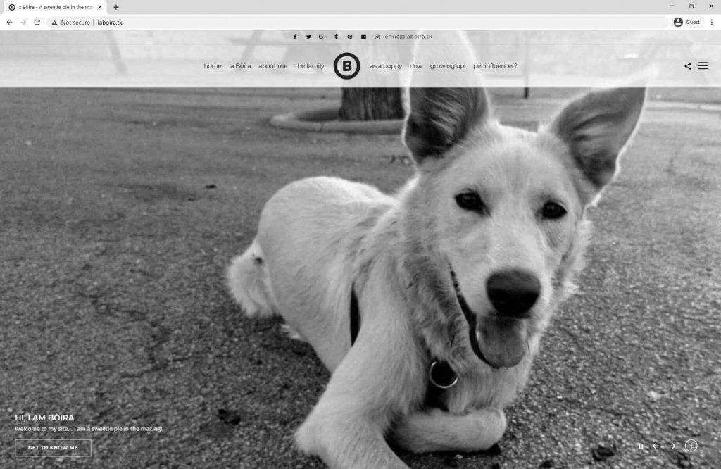 La Bòira - una gossa especial